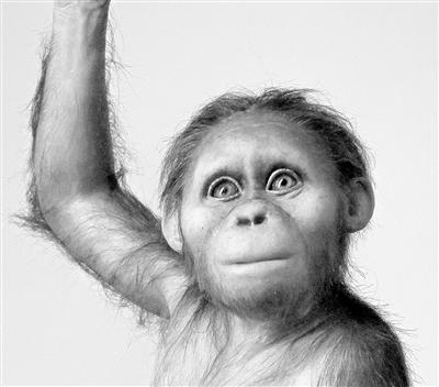 人类祖先大脑与类人猿相似 但发育缓慢童年漫长