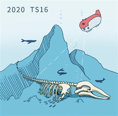 一鲸落,万物生!我国科考队员首次发现鲸落生态系统